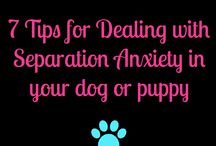 Dog Training / Tips and tricks for training your dog using positive reinforcement.