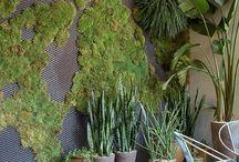 garden / by luna war