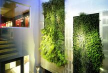 Living Wall/Vertical Garden