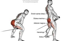 Gluteus Exercises