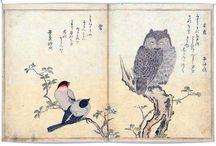 Adä loves owls