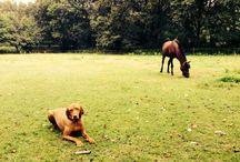 My pony's Speedy, Orchid's Leyana and Roosje.