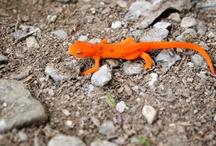 Orange Lizard / www.missdinkles.com