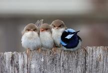 For the birds & bees / by Helen LeBrett
