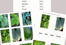 Herbal Activities for Children