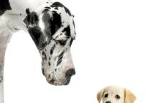 Twee of meer soorten dieren
