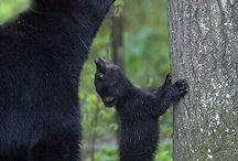 Bears / by Fred Furrow