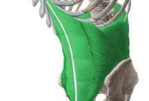 Anatomy/해부학