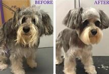 Wishbone Pet Care Grooming