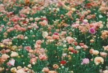 Flowering - kitchen inspiration