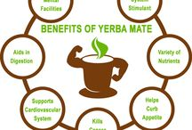 7 YERBA MATE BENEFITS / Learn About Seven Yerba Mate Benefits La yerba mate, also known as an evergreen holly, is a plant in South American known for its variety of health benefits. It contains a large number of nutrients but is most well-known for being a safe and effective nervous system stimulant.