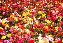 Flowers / The most beautiful flowers