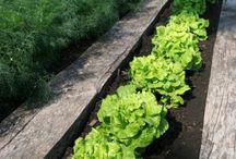 soil & compost