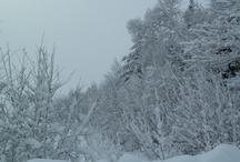 Winter / Winter is a wonderful season