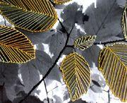 leaves, foliage