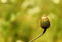 photography / Clicks i would like to share. :)