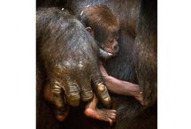 baby animals and mom / by debra cleary