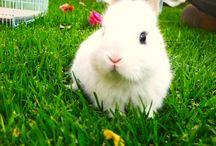 What Sound Do Bunnies Make?