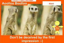 Aoolloo Boolloo Alert