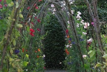 Garden / by Jennifer Snyder