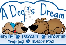 Services / We are a full service dog facility. We do boarding, daycare, grooming, and training. We also have a indoor heated pool and a full retail selection!