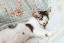 Sleeping beauty / by Brioche