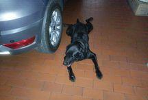 Dog, my friends beside humans :)
