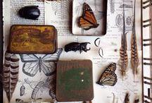 The Naturalist's collection