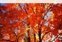 Fall is Here / Nothin' seems as strange as when the leaves begin to change