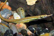 Ryby- akwarium