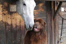 Hunde og heste