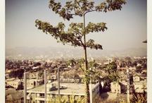 LA + NYC + WORLD / by Orly Shani