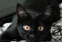 Secret Cat Lady