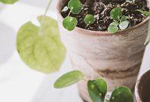 Växter och grönt