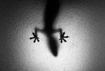 Shadows & Silhouettes  / by Meghan Costanzo