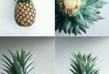 Plantaçoes