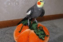 Parrot Celebrating Halloween, Toys and Accessories / Let your Parrot Trick-Or-Tweet this Halloween with our selection of Spooktacular parrot toys, accessories and Halloween Treats. Choose from a large selection of natural, foraging and shredding toys, suitable for Budgies, Lovebirds, Parrotlets, Conures, Quakers, Caiques, Ringnecks, Mini Macaw, Small Cockatoo, Amazons, African Greys, Eclectus, Large Macaw! Watch your bird finding hidden treats and stirring up some Parrot-Potion with our acrylic, trick and activity toys.