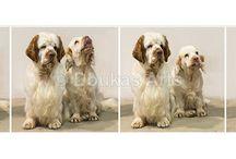 Koiranäyttely valokuvaus / Dog show shot by Dimi Doukas / Kuvia mm. Spanieliliiton koiranäyttelykuvauksistani Dog show photos I've photographed in Finland