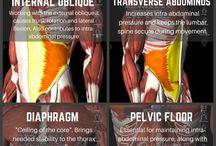 Core musculer