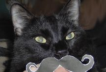 Mustache Stache / by Evil Cat