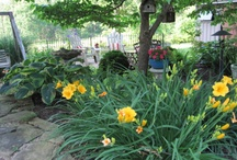 Landscaping/Gardening / by Lisa Bailey