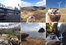Travel with your Hedgehog