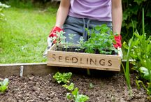 Starting a Garden / Prepare and plant a successful garden with these gardening tips and ideas.