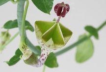 不思議な植物達