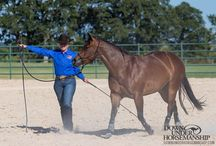 Academy Horses / Send your horse to Clinton's world-class Downunder Horsemanship Ranch to be trained with the Method.