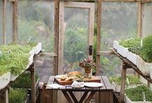 huerta , jardín , plantas