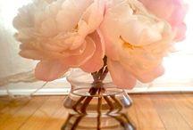 Spring has Sprung! / by S.W.Q.V. Garden