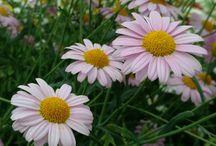 Primavera y Flores