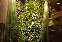 Vertical Gardens / Beanstalk Art  / by Charlene Sands