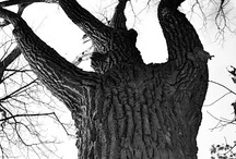 Inspiring Trees / Come closer and see. See into the trees. / by Evelyn Esperança
